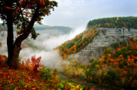 An early morning pre-sunrise foggy morning at Big Bend of Letchworth State Park, New York (NY).