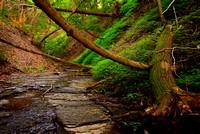 Lush Green Ravine, Chestnut Ridge Park, Orchard Park, NY (near Buffalo)