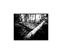 "Crossed Logs, Large Format Pinhole Photograph on 4x5"" Direct Positive Paper"