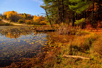 Fall Colors of the Hanging Bog, Caneadea, New York