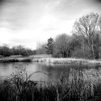 Wetlands Pond, Birdsong Park, Orchard Park, NY (near Buffalo)