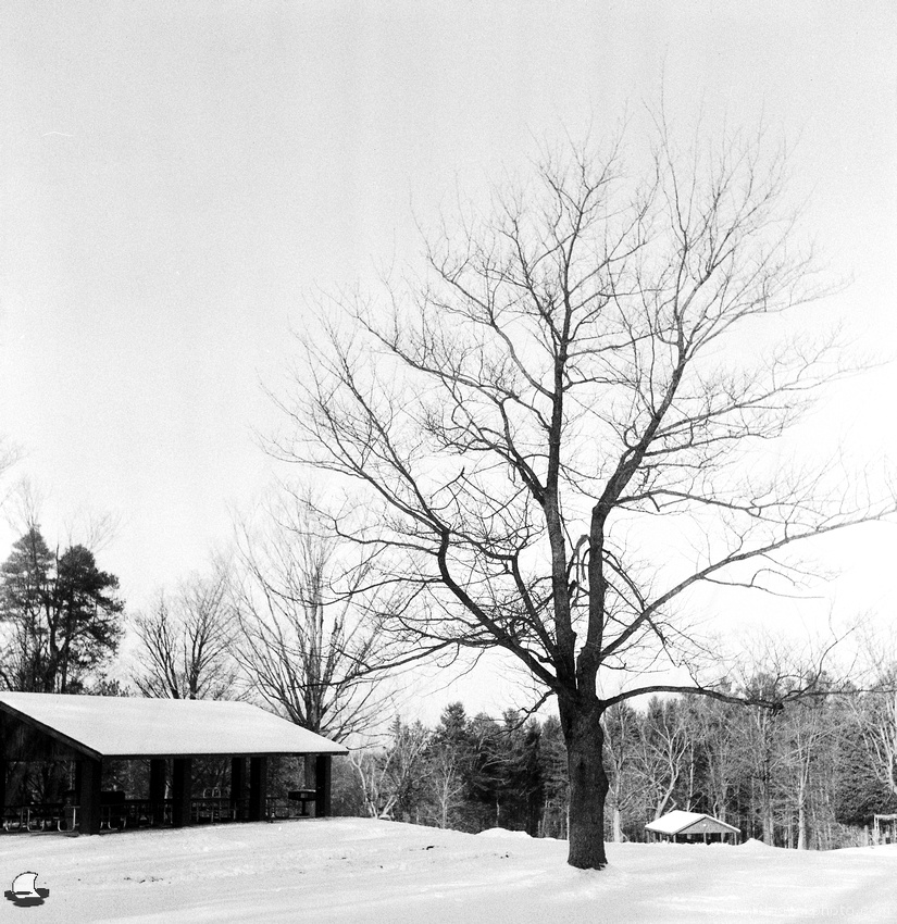Lone Tree at Chestnut Ridge, Winter, Photographed on Film: Flexaret V TLR, Fomapan 400