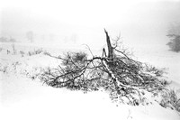Broken tree in winter storm in Buffalo and Western New York