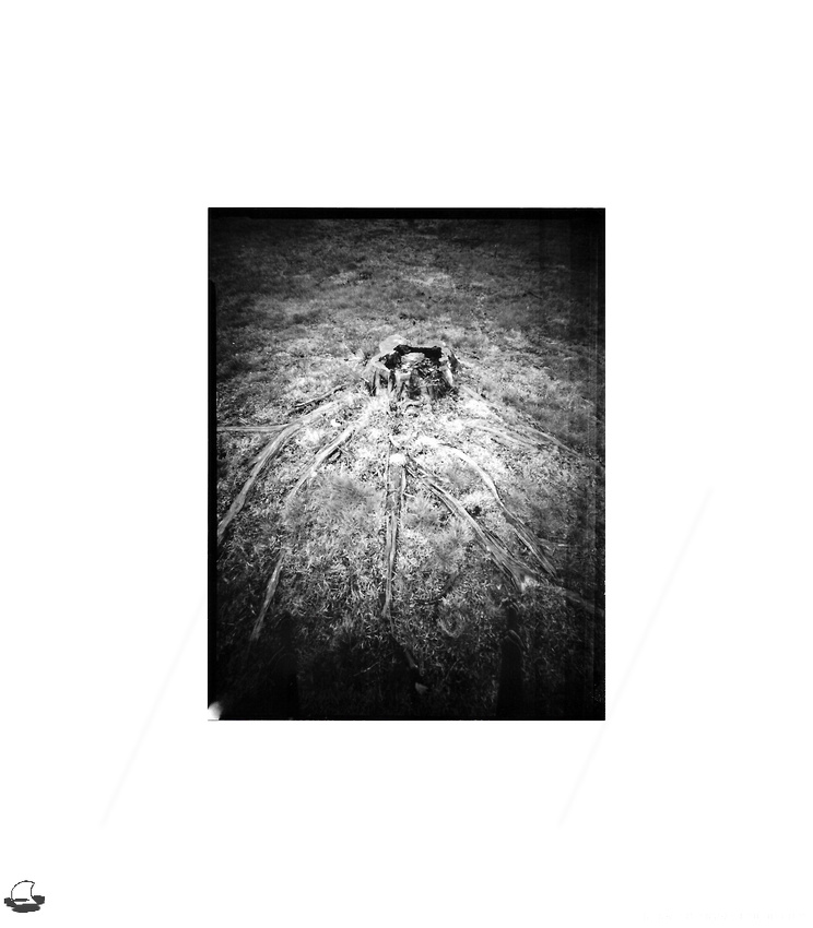 Stump & Roots - Worldwide Pinhole Photography Day (WPPD) 2020