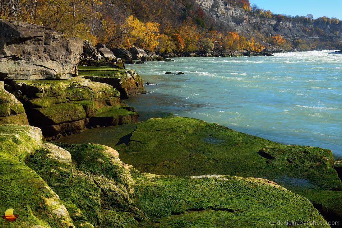 Mossy Niagara River Banks, Whirlpool State Park, Niagara Falls, New York (NY)
