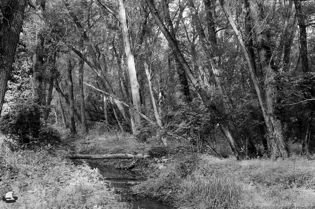 Birdsong Creek in the Woods with a Pentax K1000 on Kodak Double-X 5222, Orchard Park, NY