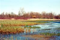 Oak Orchard Wildlife Management Area near Iroquois National Wildlife Refuge, Nikon N75, Kodak Portra 400 Film