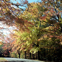 Colors Turning at Chestnut Ridge