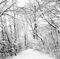 White Trail of Wonders in Winter, Birdsong Park, Orchard Park, New York (NY)