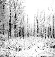 Snow Covered Spooky Winter Wetlands, Orchard Park, New York