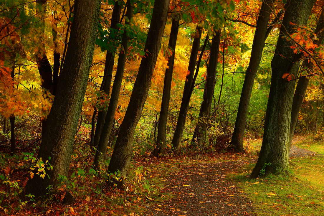 Autumn Collection of Photographs
