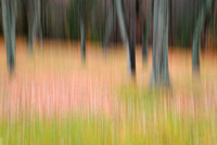 Dancing Trees in the Fall, Photographic Impressionism, Chestnut Ridge Park, Orchard Park, NY