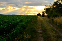 Dirt Road to Sunset, Moravian Fields, Czech Republic