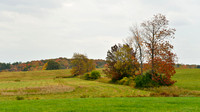 Fields & Trees of Fall, Southtowns of Buffalo, NY