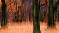 Photographic Painting of Fall,, Chestnut Ridge Park, Orchard Park, NY