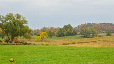 Rainy Fall Day, Buffalo, Southtowns