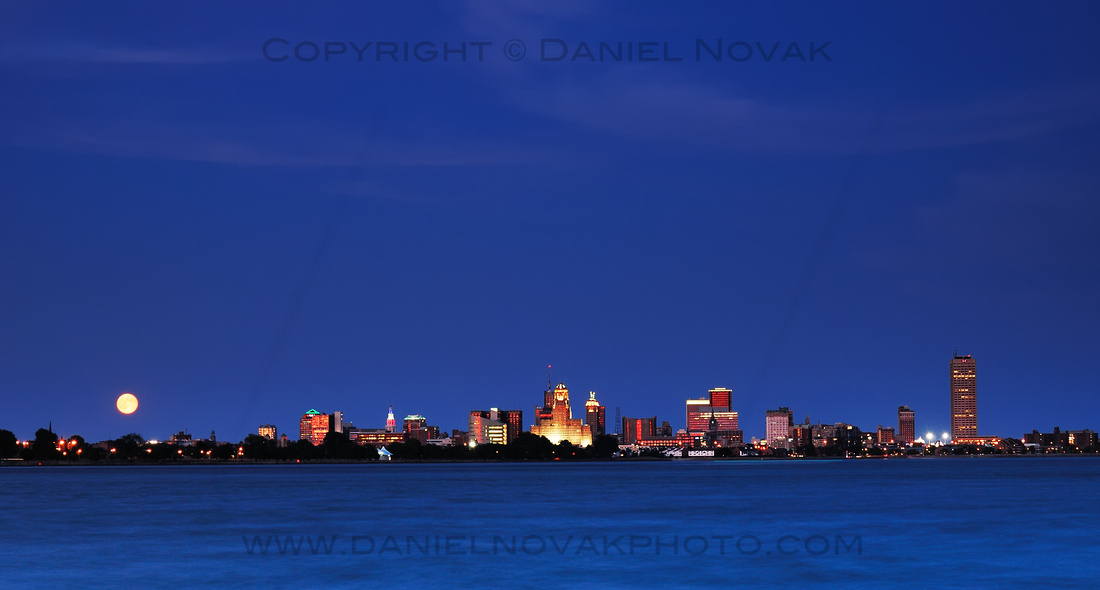 Buffalo during Blue Hour Collection of Photographs