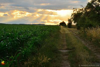 Field Path at Sunset, Moravian Countryside, Czech Republic