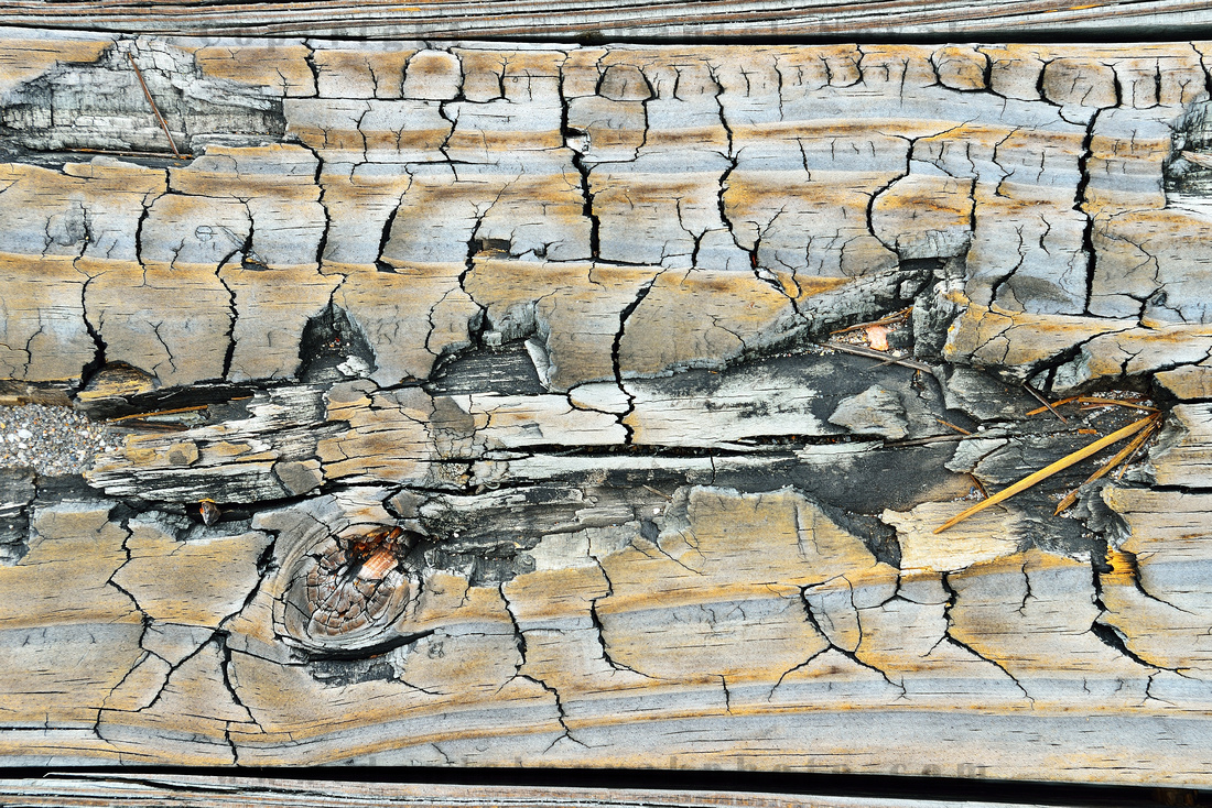 A treasure at your feet, John D MacArthur Beach State Park Wood Board, Southern Florida (FL).