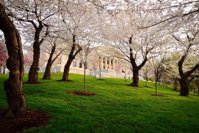 Through the Blossoms, Buffalo Museum of History, Twelve Months, Twenty Photos.