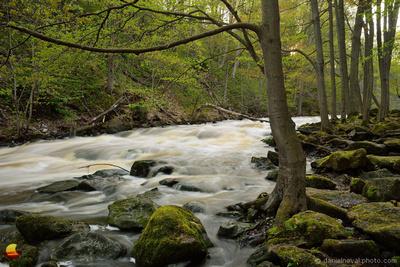High Water at Murder Creek, Akron Falls County Park near Buffalo, NY