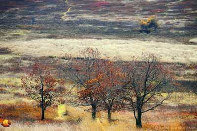 The Big Meadow Painting, Shenandoah National Park, Virginia (VA).