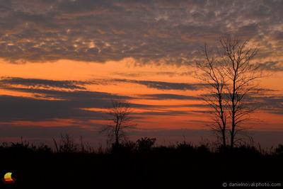 Tree at Dawn, North Dunes Nature Preserve, Lake Michigan, Zion - Chicago, IL