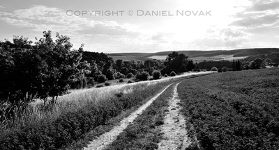 Tracks in Alfalfa Field, Southern Moravia, Czech Republic, Europe. Twelve Months, Twenty Photos.