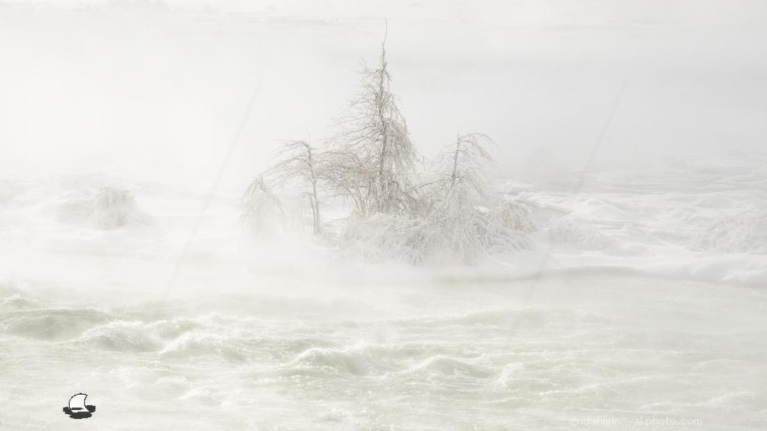 Isolated Brave Trees, Upper Niagara Rapids, Niagara Falls in Winter