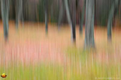 Dancing Trees in the Fall, Impressionistic Chestnut Ridge