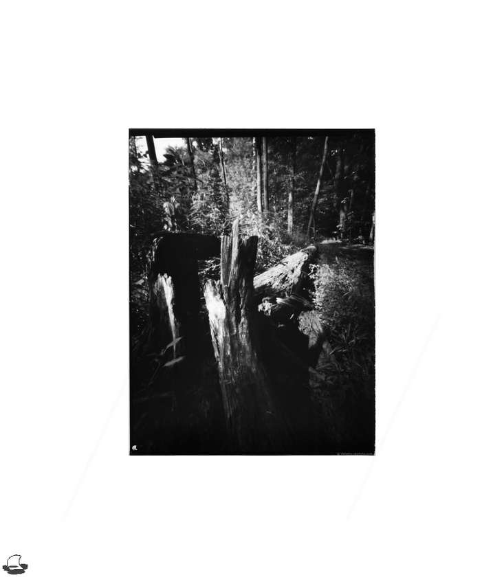 "Stump, Lensless 4x5"" Pinhole, Chestnut Ridge, Orchard Park, NY"