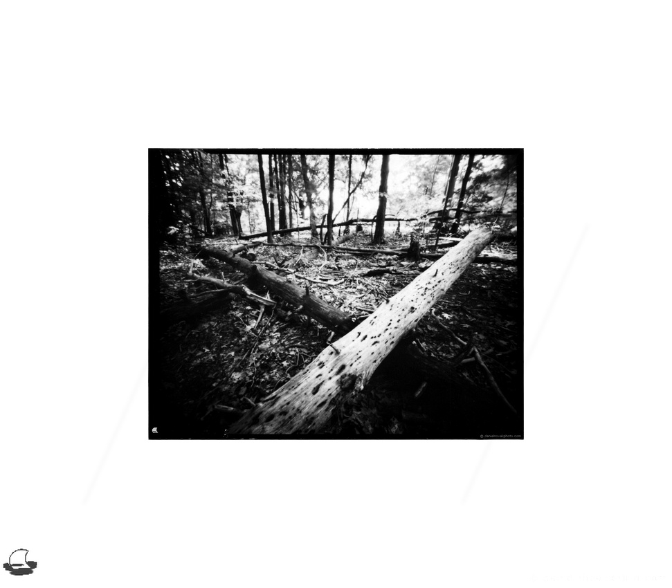 "Crossed Logs, Lensless 4x5"" Pinhole, Chestnut Ridge Park, Orchard Park, NY"