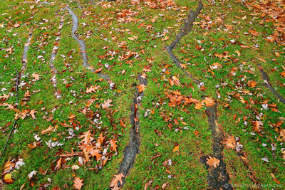 Roots & Fallen Leaves, Chestnut Ridge Park, Orchard Park, NY