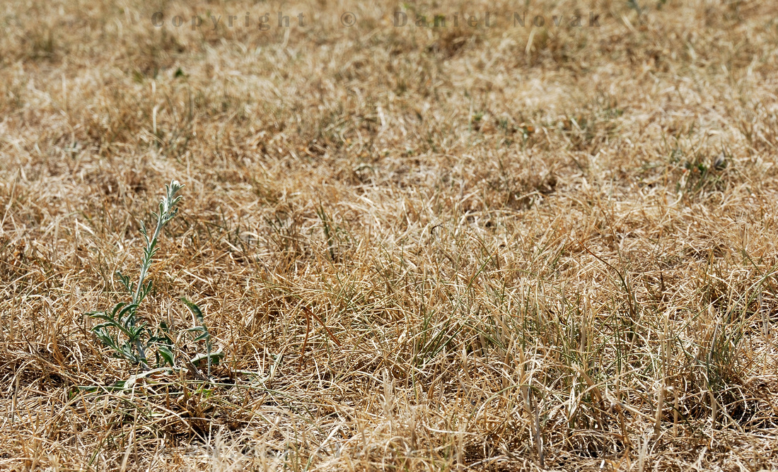 Dry grass and dry conditions increasing fire hazard triggering a residential burn ban for 90 days through October 2012.