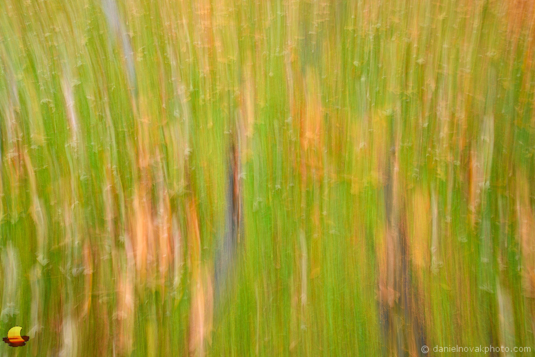 Roots & Leaves - Vertical Blur, Chestnut Ridge Park, Orchard Park, NY