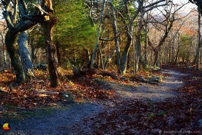 Stony Man Trail, Shenandoah National Park