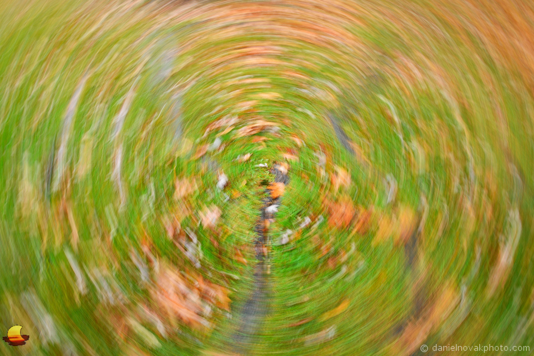 Roots & Leaves - Circular Blur, Chestnut Ridge Park, Orchard Park, NY