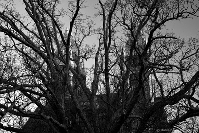 Towers of Richardson Olmsted Complex Through an Old Tree, Buffalo, NY