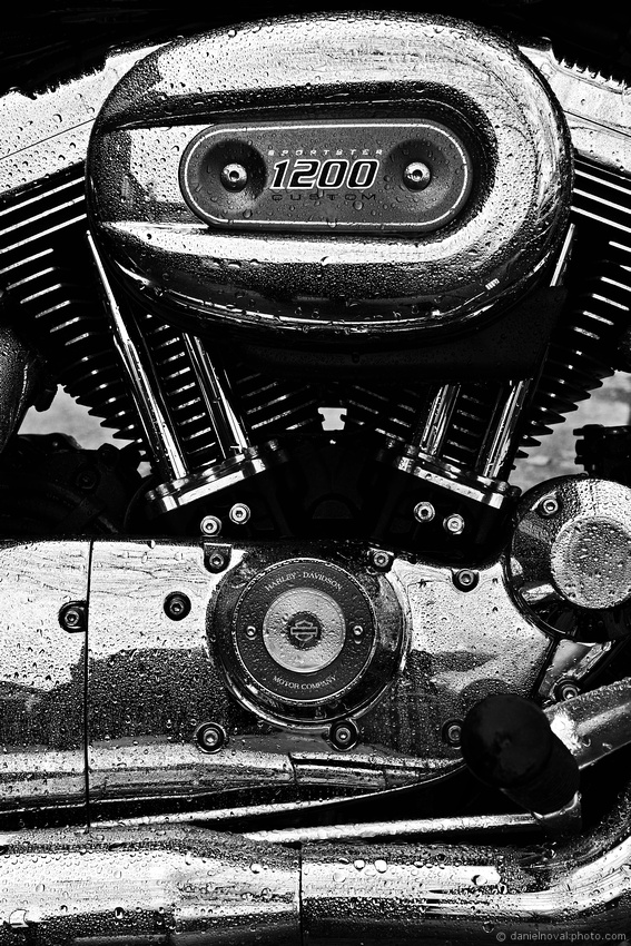 Washed and Wet Harley-Davidson Sportster 1200 Custom Engine in Black and White