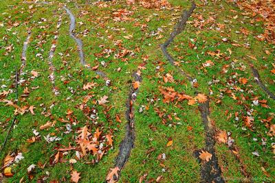 Roots & Fallen Leaves, Chestnut Ridge Park, Orchard Park, NY