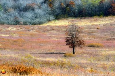 A Tree on the Big Meadow, Shenandoah National Park