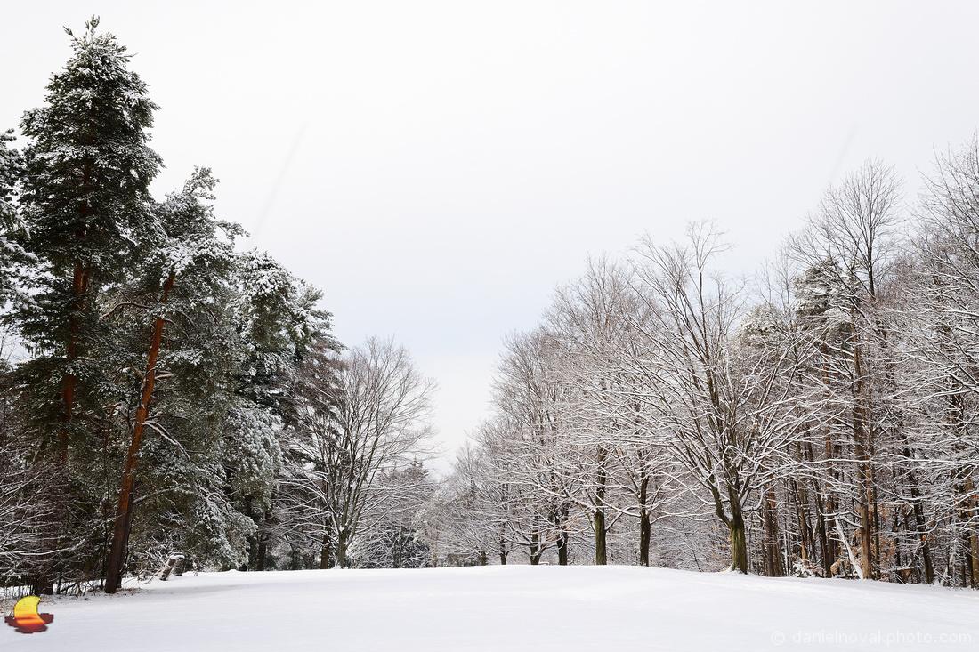 Trees Decorated for Holidays, Chestnut Ridge Park, Orchard Park - Buffalo, NY